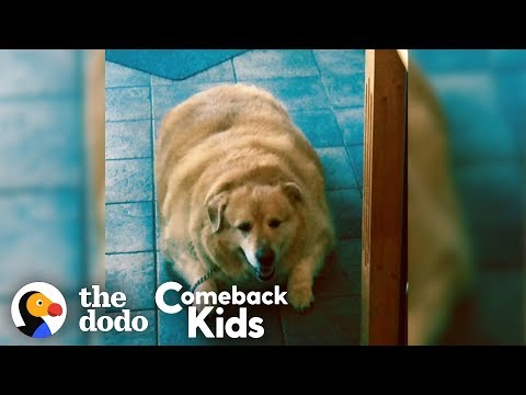 Watch What Happens When This Dog Loses 100 Pounds!   The Dodo Comeback Kids