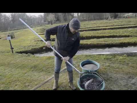 La reproduction des truites à la pisciculture