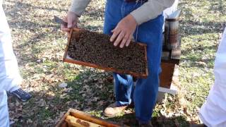 Beekeeping Basics: Class Highlights