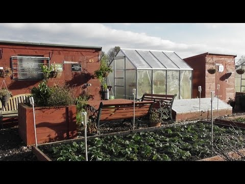 Jobs To Do Around The Allotments 11-11-2016