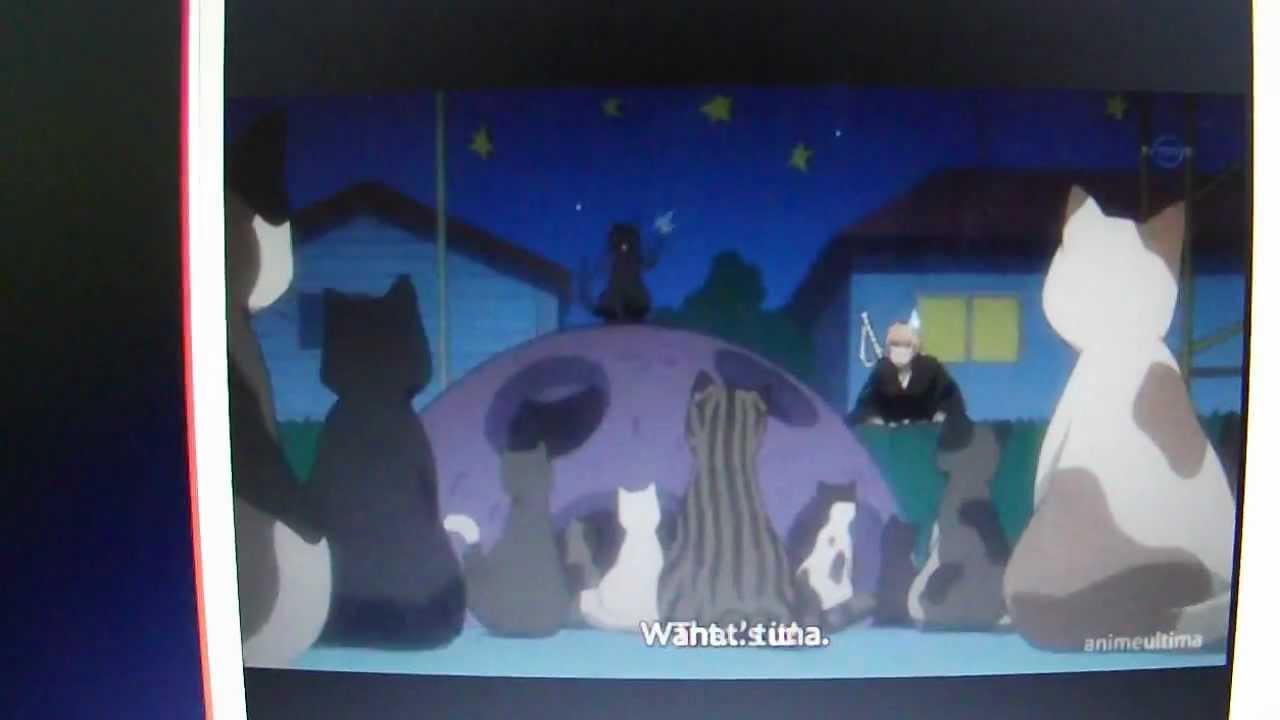 Bleach : Yoruichi teaching cats how to manipulate humans - YouTube