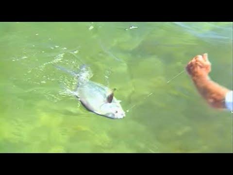 Permit and Tarpon Fishing on the Flats of Key Largo Florida