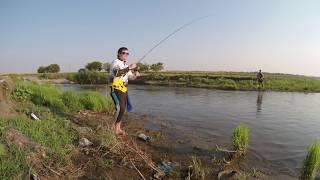 Рыбалка на голавля летом на колебалки от Akkoi. Утрений жор рыбы. OnlyFishing