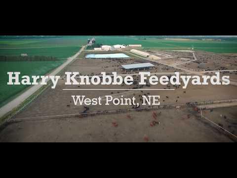 Knobbe Feedyards - West Point, NE