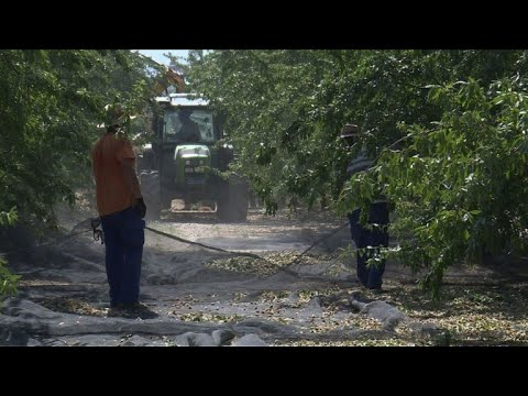 Spanish farmers go nuts for almonds as global demand booms