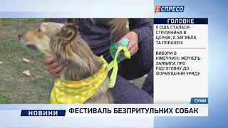 Фестиваль безпритульних собак