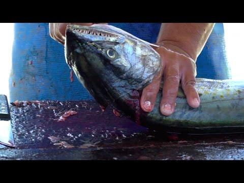 Fish Cutting at Fish Market - El Salvador