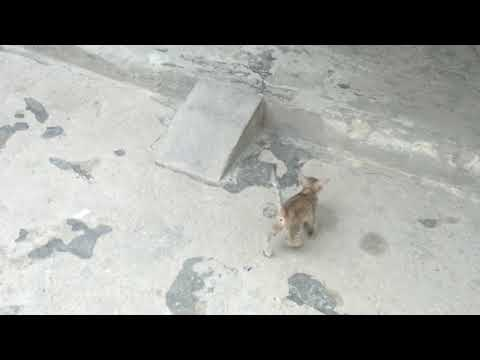 little cats playing dera ghazi khan pakistan