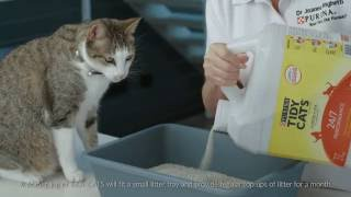 TYPES OF CAT LITTER EXPLAINED