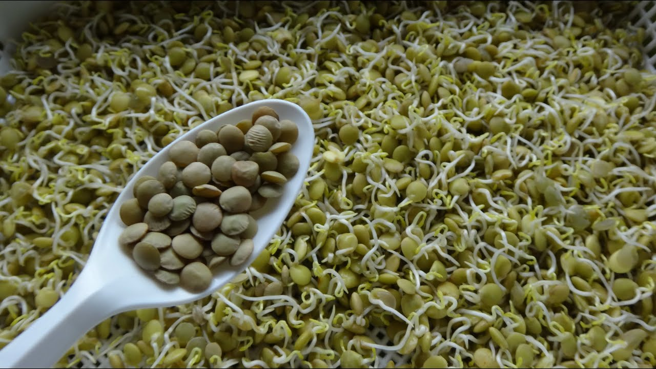 how to cook beans sprout quickly