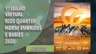 1º LeilÃo Virtual Rios Quarter Horse - Embrioes E Babies 2020