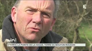 SUIVEZ LE GUIDE : La pointe de la Hague, terre du mouton Roussin