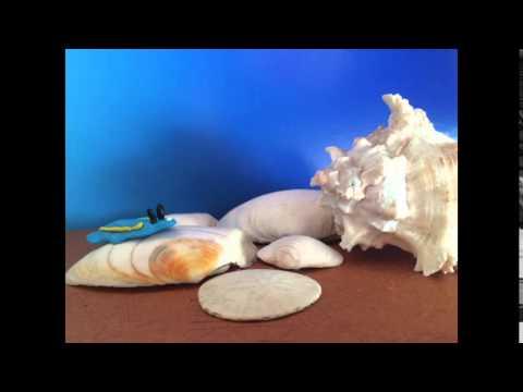 Mollusk Claymation Marine Science