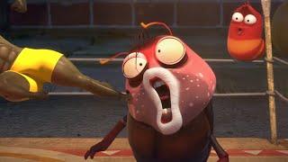 LARVA | CAMPEONATO DE BOXEO | Película de dibujos animados | Dibujos animados para niños | WildBra