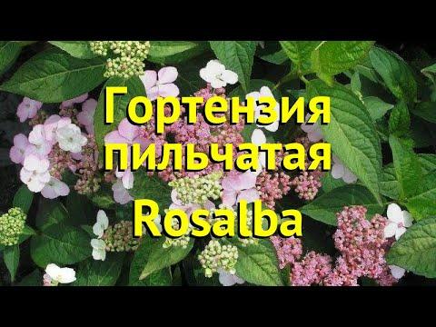 Гортензия пильчатая Розальба. Краткий обзор, описание характеристик hydrangea serrata Rosalba