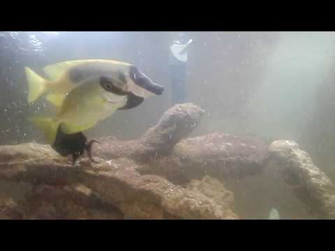 Aqua Alex's Freshwater and Saltwater Aquarium June 2017 Update