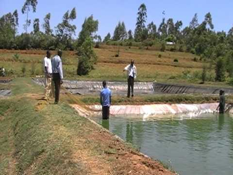 Richest people in africa unleash the power within for Fish pond preparation