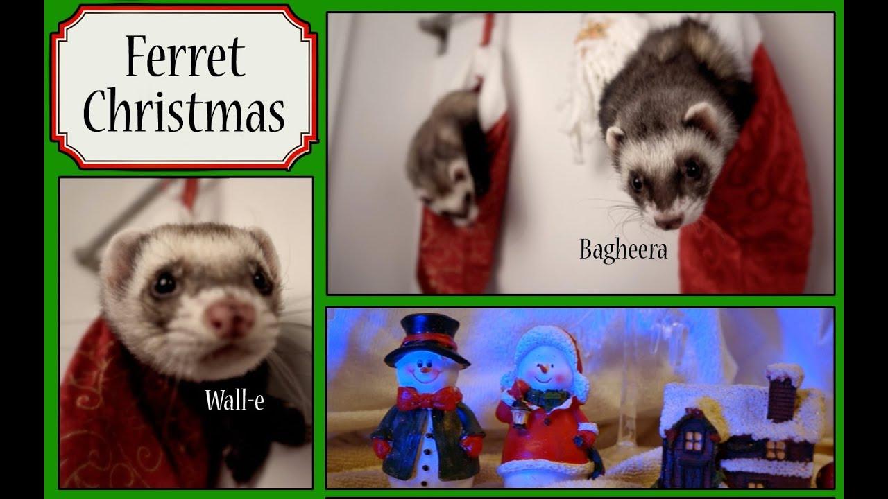 Christmas Ferret.Cuteness Overload Ferret Christmas