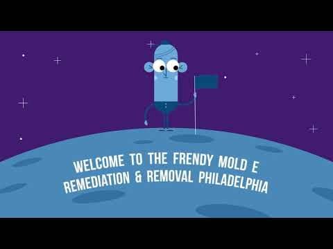 Best Mold Removal in Philadelphia, PA