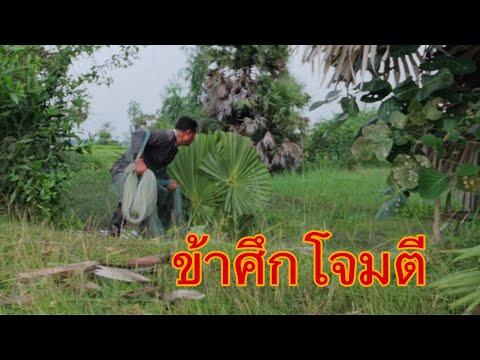 ทำบังเกอร์ หลบฝูงปลา ซุ่มหว่านแห L Cast Net Fishing Of Thailand ESAN