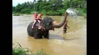 смотреть видео про слонов для детей. В Мире Детей!