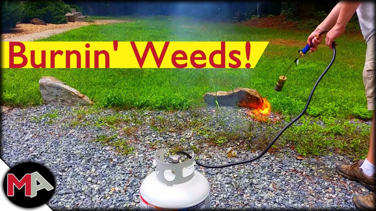 Burning Weeds With A Propane Torch Youtube