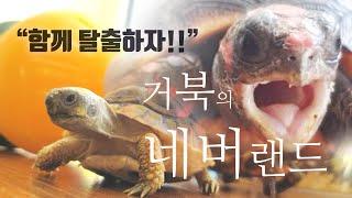 실내일광욕 중 거북이 탈출!?! / 육지거북이 일광욕시…