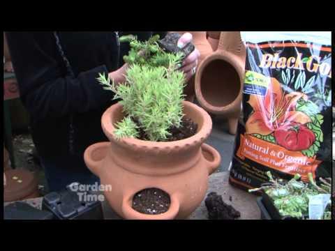 Sedum Planting