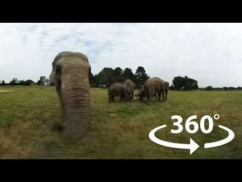 Meet our elephants! | 360° Video