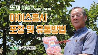 [아이스홍시] 4차-아이스홍시 포장 및 유통방법 | 청…