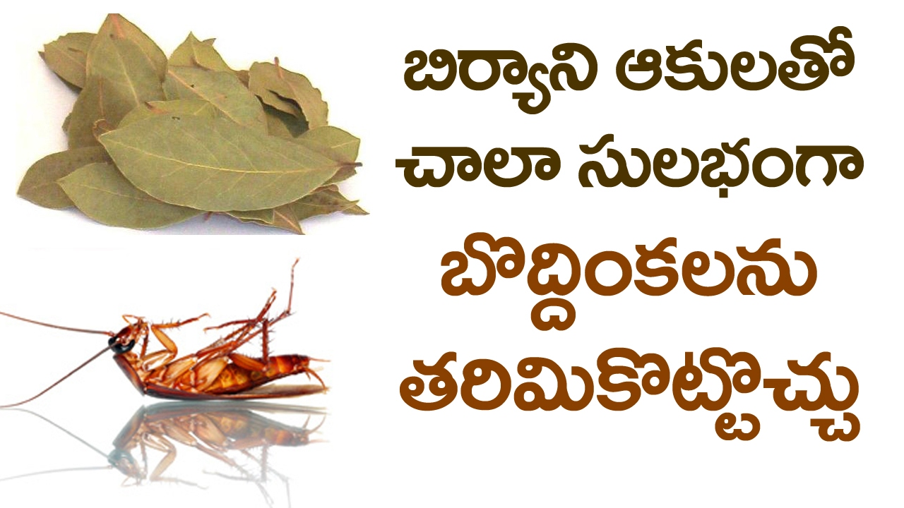 You Can Get Rid Off Cockroaches At Home With Bay Leaves Simple Home Remedies Vtube Telugu Youtube