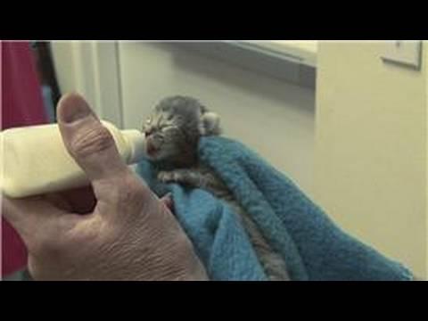 Kitten Cat Care When Do Newborn Kittens Open Their Eyes Youtube