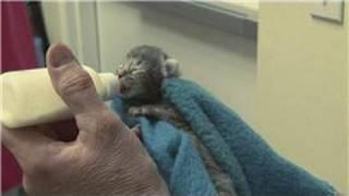 Kitten & Cat Care : When Do Newborn Kittens Open Their Eyes?
