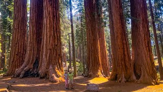 Camping in California | Expl๐ring Sequoia & Kings Canyon National Parks