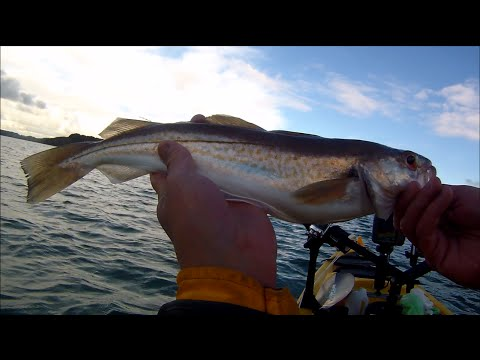 Kayak Fishing - Fishing For Estuary Whiting - Where To Fish And Positioning The Anchor