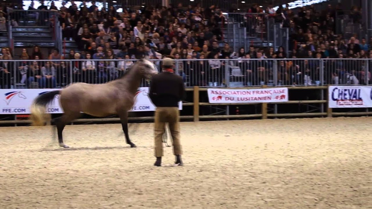 Salon du cheval 2014 paris youtube - Salon du cheval 2014 paris ...