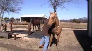 Leading & Working a Horse on a Lariat / Lasso / Rope - Horse Picking Up Hat- Horse Abused