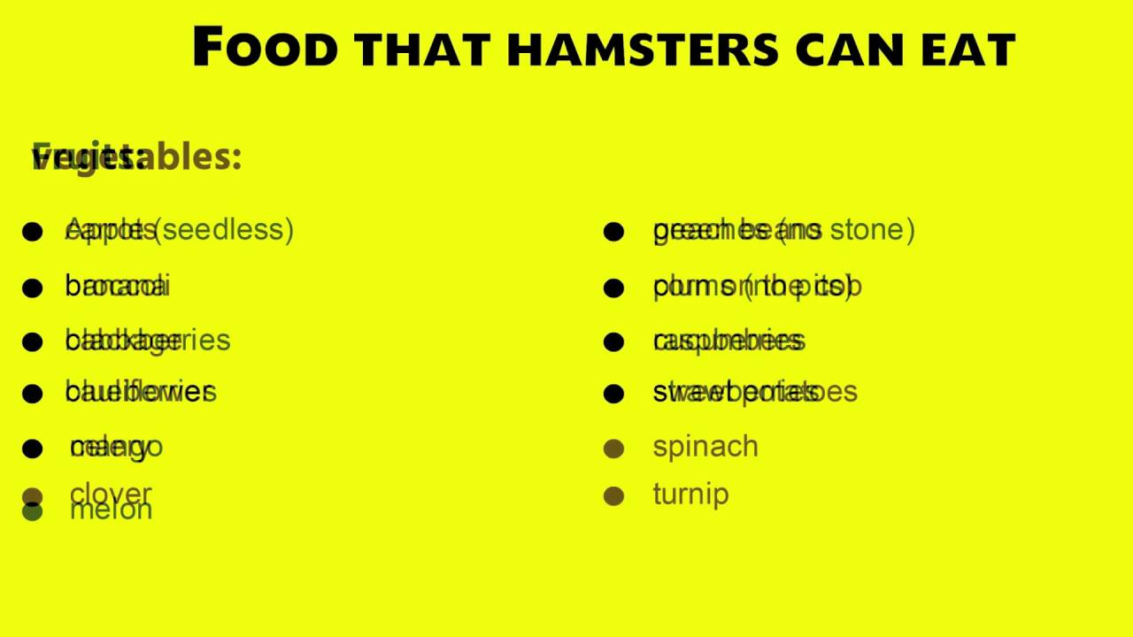 Food Hamsters Can Not Eat