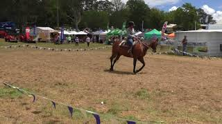 Why Does My Horse Small Farm Field Days Sunday