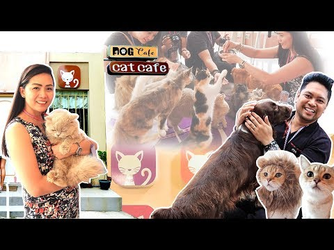 Tabby Town Cat And Dog Cafe - Silang, Cavite, Philippines