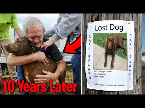 Top 5 LOST DOGS FOUND & REUNITED WITH THEIR OWNERS! Boy Finds Lost Dog After 10 Years, Happy Dog