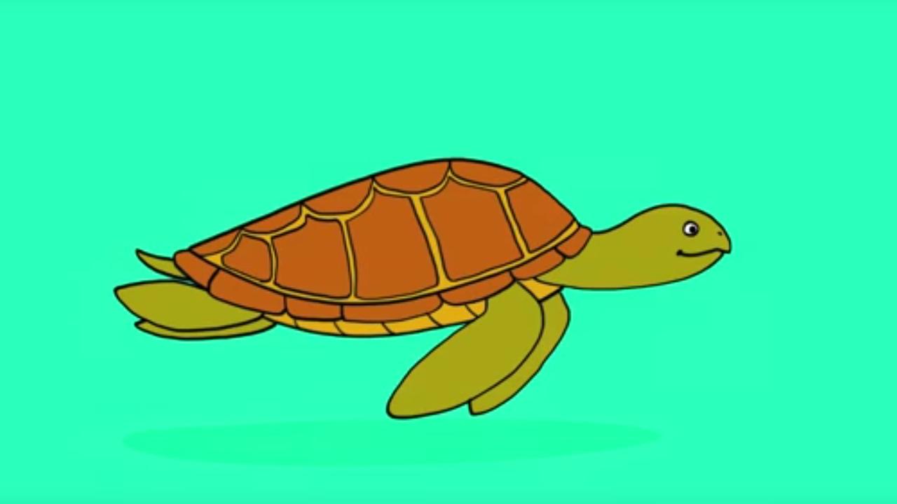 Apprendre dessiner une tortue de mer youtube - Comment dessiner une tortue ...