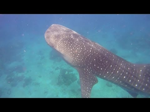 Scuba Diving #2 - Philippines, Southern Leyte - Dec 2012 [HD]