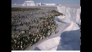 Жизнь в Антарктиде