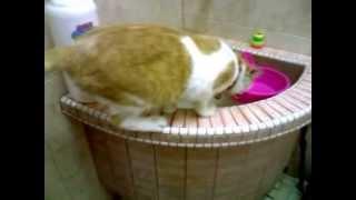 Cat toilet training FAIL!