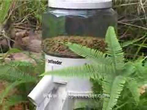 solar mount fish post ponds feeder time feeders for elite on