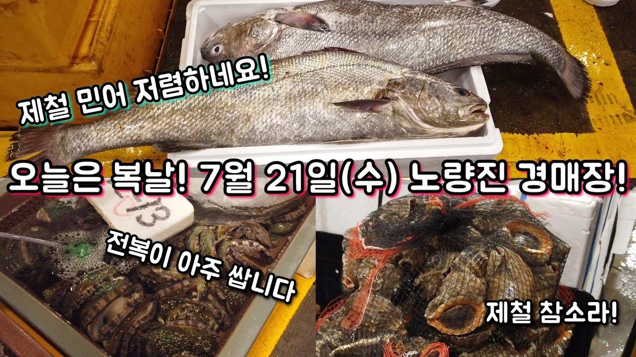 올해는 민어, 전복이 역대급으로 저렴하네요! 7월 21일 노량진 경매장 최신 시세!