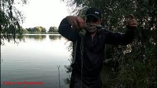 Семейная рыбалка на Дунае Ловим сазана и сома