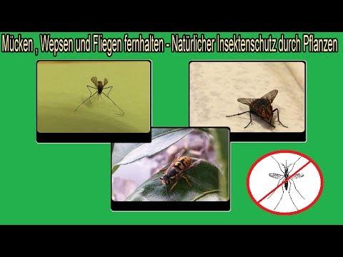 Natürlicher Insektenschutz Schutz Vor Mücken Wespen Fliegen