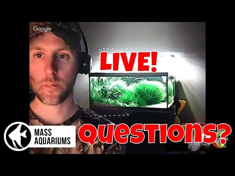 Sunday Night LIVE Stream: Viewers Choice/Hangouts/Planted Aquariums & Reef Tanks